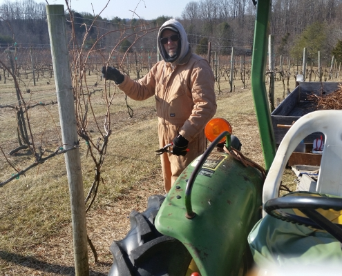 Donald Furrow-Scott pruning the vines