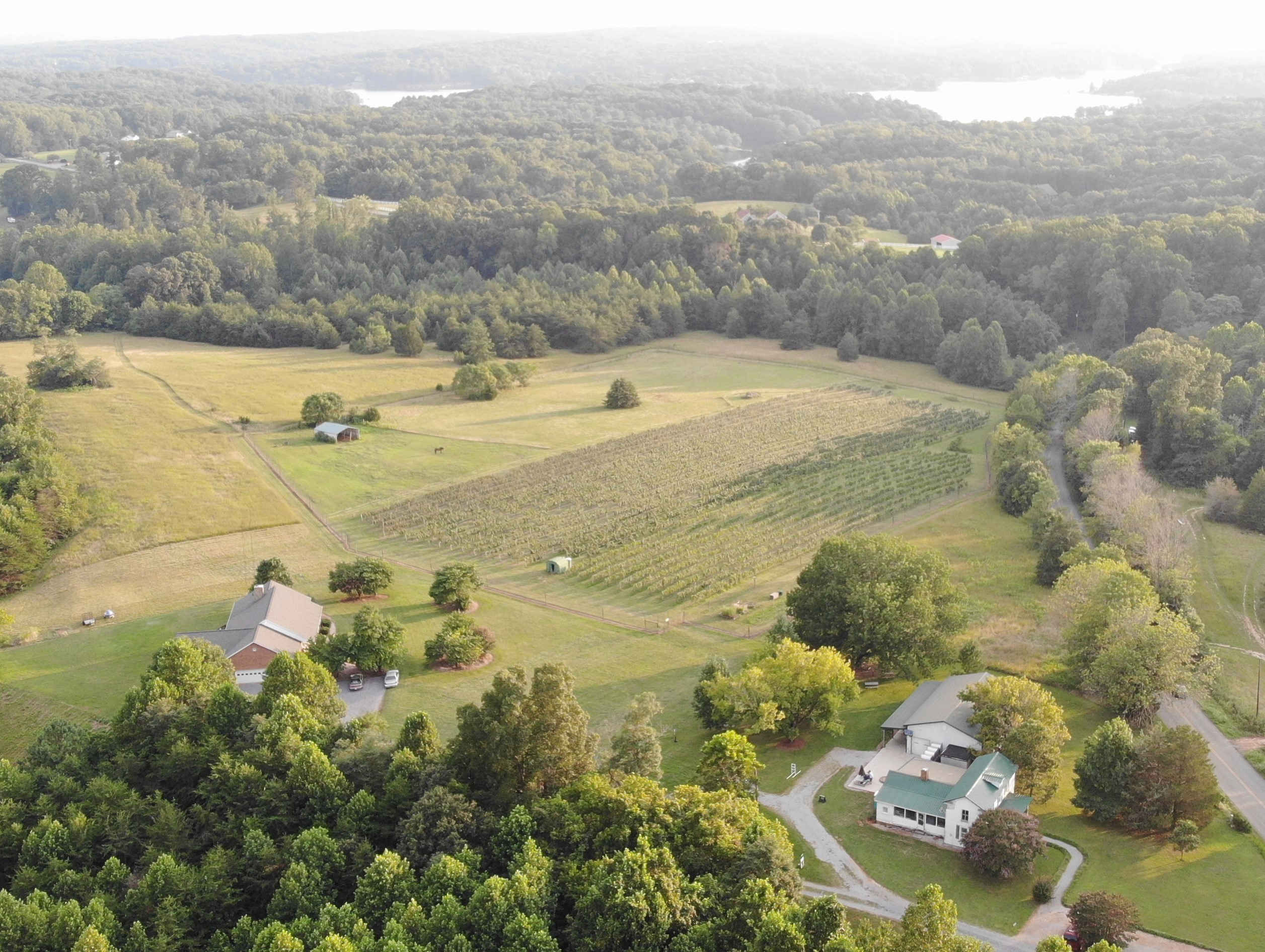 Hickory Hill Vineyards with Smith Mountain Lake in Background